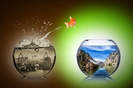 36863919 - fish rethink and change concept